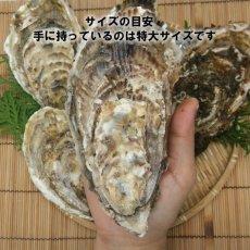 画像3: 三陸赤崎産 殻付熟成牡蠣 (3)
