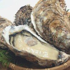 画像6: 三陸赤崎産 殻付熟成牡蠣 (6)
