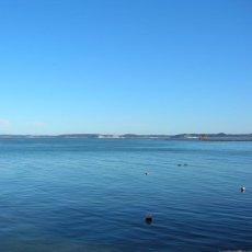 画像5: 北海道厚岸産牡蠣の「牡蠣グラタン」 (5)