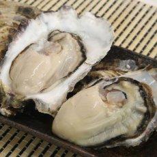 画像2: 北海道厚岸産 丸牡蠣まるえもん (2)