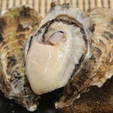 画像3: 北海道厚岸産 丸牡蠣まるえもん (3)