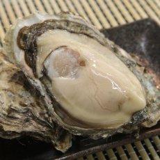 画像4: 北海道厚岸産 丸牡蠣まるえもん (4)
