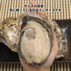 画像5: 北海道厚岸産 丸牡蠣まるえもん (5)