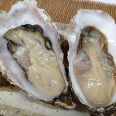 画像2: 北海道厚岸産 カキえもん (2)