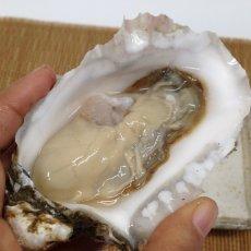 画像6: 北海道厚岸産 カキえもん (6)