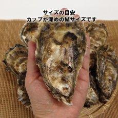 画像4: 北海道厚岸産 カキえもん (4)