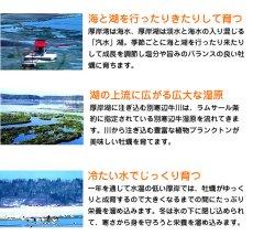 画像4: 北海道厚岸産 牡蠣飯の素 (4)