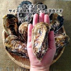 画像5: 兵庫赤穂坂越産 坂越かき (5)