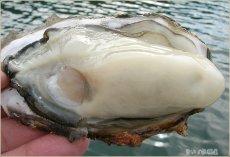 画像2: 兵庫坂越産 牡蠣 さこし忠臣蔵 (2)