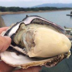 画像2: 熊本天草産 天領岩牡蠣 (2)