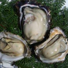 画像6: 熊本天草産 天領岩牡蠣 (6)