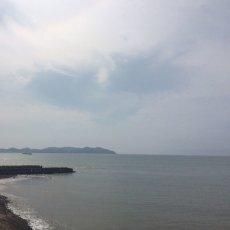 画像9: 熊本天草産 天領岩牡蠣 (9)