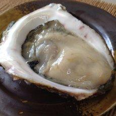画像7: 熊本天草産 天領岩牡蠣 (7)