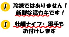 画像5: 【お急ぎ便】三陸産志津川産 バーベキュー用ふぞろい殻付牡蠣 (お届け地域限定) (5)
