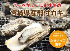 画像12: 三陸産 バーベキュー用殻付牡蠣 (12)