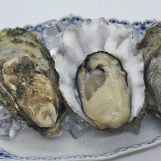 画像6: 北米バロンポイント 殻付牡蠣 (6)