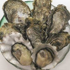 画像5: 北米バロンポイント 殻付牡蠣 (5)