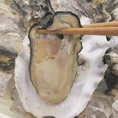 画像3: 北米バロンポイント 殻付牡蠣 (3)