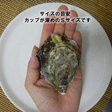 画像2: ウッディアイランド 殻付牡蠣 (2)