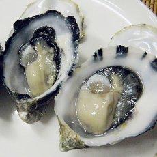 画像3: ウッディアイランド 殻付牡蠣 (3)