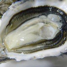 画像4: ウッディアイランド 殻付牡蠣 (4)