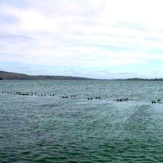 画像5: ウッディアイランド 殻付牡蠣 (5)