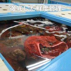 画像7: ウッディアイランド 殻付牡蠣 (7)