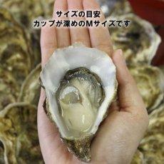 画像2: アイリッシュプレミアム殻付牡蠣 (2)