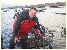 画像5: アイリッシュプレミアム殻付牡蠣 (5)