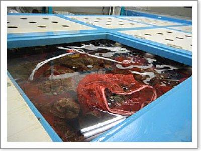 画像1: ウッディアイランド 殻付牡蠣