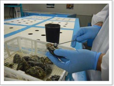 画像3: ウッディアイランド 殻付牡蠣