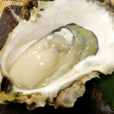 画像5: 長崎 五島列島産 岩牡蠣 (5)