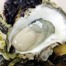 画像4: 長崎 五島列島産 岩牡蠣 (4)