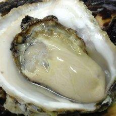 画像3: 長崎 五島列島産 岩牡蠣 (3)