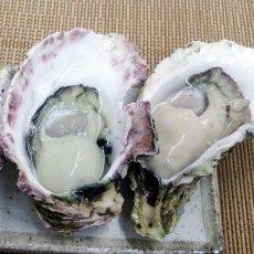 画像2: 長崎 五島列島産 岩牡蠣 (2)