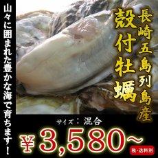 画像1: 長崎五島列島産 殻付牡蠣 (1)