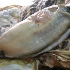 画像2: 【お急ぎ便】 長崎五島列島産 殻付牡蠣 (配送地域限定) (2)