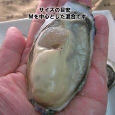 画像5: 【お急ぎ便】 長崎五島列島産 殻付牡蠣 (配送地域限定) (5)