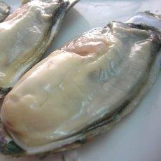 画像4: 【お急ぎ便】 長崎五島列島産 殻付牡蠣 (配送地域限定) (4)
