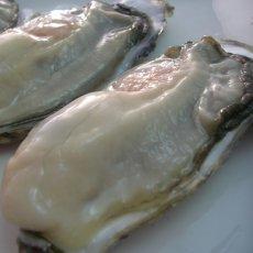 画像3: 【お急ぎ便】 長崎五島列島産 殻付牡蠣 (配送地域限定) (3)