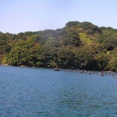 画像8: 【お急ぎ便】 長崎五島列島産 殻付牡蠣 (配送地域限定) (8)