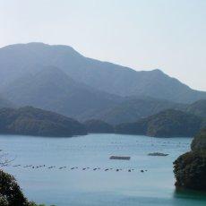 画像7: 【お急ぎ便】 長崎五島列島産 殻付牡蠣 (配送地域限定) (7)