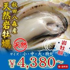 画像1: 秋田八森産 天然岩牡蠣 (1)