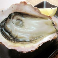 画像7: 秋田八森産 天然岩牡蠣 (7)