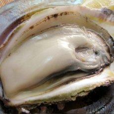 画像6: 秋田八森産 天然岩牡蠣 (6)
