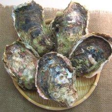 画像3: 秋田八森産 天然岩牡蠣 (3)