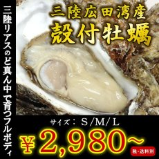 画像1: 三陸広田湾産 殻付牡蠣 (1)