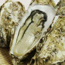 画像4: 三陸広田湾産 殻付牡蠣 (4)