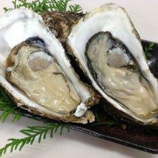 画像9: 三陸広田湾産 殻付牡蠣 (9)