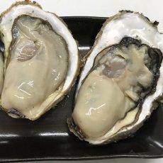 画像3: 三陸広田湾産 殻付牡蠣 (3)